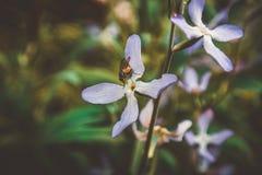 Gebied van madeliefjebloemen stock afbeeldingen