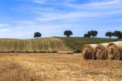 Gebied van oogsttarwe en strobaal Stock Foto