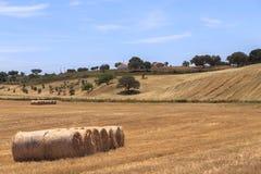 Gebied van oogsttarwe en strobaal Stock Afbeelding