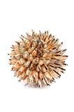 Gebied van overzeese shells Stock Foto's