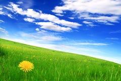 Gebied van paardebloemen en blauwe bewolkte hemel Stock Foto