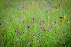 Gebied van purpere en gele wildflowers Royalty-vrije Stock Afbeeldingen