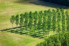 Gebied van regelmatig geplante bomen stock afbeeldingen