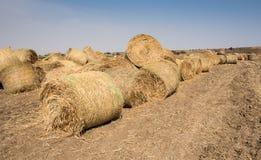 Gebied van Ronde balen van hooi na het oogsten Stock Fotografie
