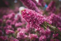 Gebied van roze bloemen, de zomer dalings achtergrondaardlandschap Royalty-vrije Stock Afbeeldingen