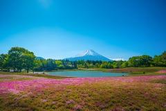 Gebied van roze mos van Sakura of kersenbloesem in Japan Stock Afbeeldingen