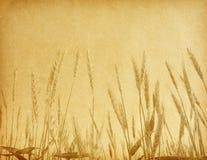 gebied van tarwe. royalty-vrije stock foto
