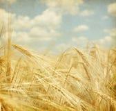 Gebied van tarwe. stock foto's