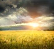 Gebied van tarwe met onheilspellende wolken Royalty-vrije Stock Afbeelding