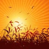 Gebied van tarwe, vector Stock Afbeeldingen