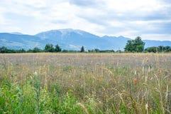 Gebied van tarweoren, bloemen, en de bergen van de Pyreneeën Royalty-vrije Stock Foto