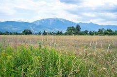 Gebied van tarweoren, bloemen, en de bergen van de Pyreneeën op de achtergrond Royalty-vrije Stock Fotografie