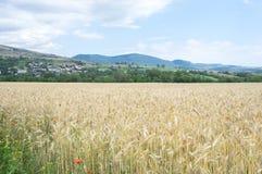 Gebied van tarweoren en de bergen van de Pyreneeën op de achtergrond Stock Foto