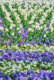 Gebied van tulpen Royalty-vrije Stock Foto