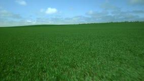 Gebied van vers groen gras stock footage