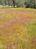 Gebied van wilde bloemen royalty-vrije stock foto's