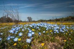 Gebied van wilde bloemen Het seizoen van Californië wildflower stock afbeelding