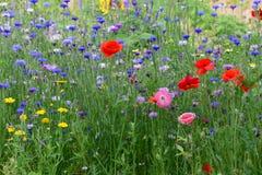 Gebied van wilde bloemen met veel kleuren in tuin in België royalty-vrije stock foto's