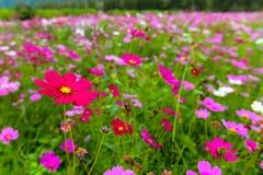 Gebied van wildflowers Stock Fotografie