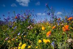 Gebied van wildflowers Royalty-vrije Stock Afbeeldingen