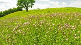 Gebied van Wildflowers stock video