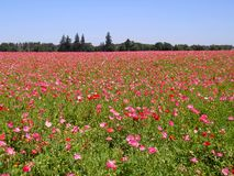 Gebied van Wildflowers Stock Foto