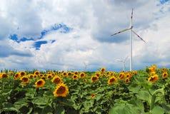 Gebied van zonnebloemen en windturbine Royalty-vrije Stock Afbeelding