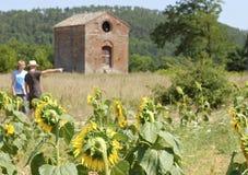 Gebied van zonnebloemen in Toscanië Stock Fotografie