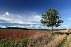 Gebied, weg, boom, blauwe hemel en wolken stock afbeelding