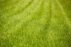 Gebied of weide met groen vers gras stock afbeeldingen