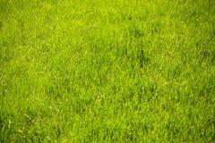 Gebied of weide met groen vers gras royalty-vrije stock fotografie