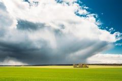Gebied of Weidelandschap met Groen Gras onder Toneel de Lente Blauwe Dramatische Hemel met Witte Pluizige Wolken Stock Afbeeldingen