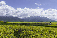 Gebieden, bergen, wolken en de blauwe hemel Royalty-vrije Stock Foto's