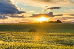 Gebieden bij zonsondergang in de Provence Royalty-vrije Stock Afbeelding
