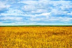 Gebieden, Bossen, Wolken, Aard en het Ontspannen Stock Fotografie