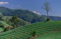 Gebieden in de bergen worden gekweekt die royalty-vrije stock afbeelding