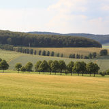 Gebieden en bos in land royalty-vrije stock afbeeldingen