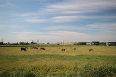 Gebieden en landbouwbedrijven met landweg in Zuidplaspolder in Moordrecht in Nederland royalty-vrije stock afbeeldingen