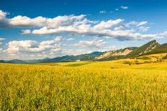Gebieden en weiden in landelijk landschap met bergen bij de lente stock afbeelding