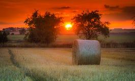 Gebieden en weiden tijdens zonsondergang Stock Afbeelding