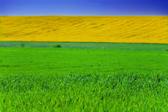 Gebieden in groen en geel Royalty-vrije Stock Afbeelding