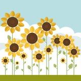 Gebieden van Abstracte Zonnebloemen met Blauwe Hemel en Wolken Royalty-vrije Stock Afbeeldingen