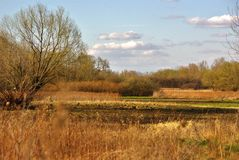 Gebieden van bies en korrel met bos en hemel bij de achtergrond Stock Foto's