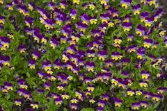 Gebieden van bloemen Stock Foto's