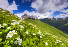 Gebieden van bloesembloemen in de bergen Stock Foto's