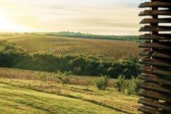 Gebieden van druiveninstallaties op een zonnige dag royalty-vrije stock afbeeldingen