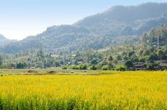 Gebieden van gele bloemen Royalty-vrije Stock Afbeeldingen