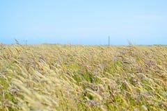 Gebieden van gras stock foto