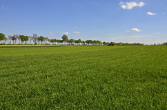 Gebieden van groene gewassen in het land Royalty-vrije Stock Afbeelding
