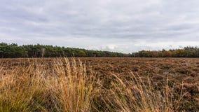 Gebieden van Heide in de herfst stock afbeelding